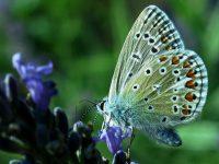 Raupe und Schmetterling